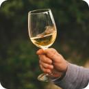 Potraviny | Alkohol | Vína | Bílé